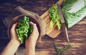 Penyiapan Lahan Hidroponik untuk Sayuran Organik