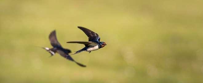 5 Tips Usaha Budidaya Ternak Burung Walet yang Berhasil
