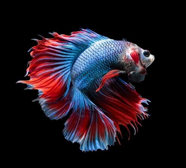 8 Jenis Ikan Hias Ini Bisa Menjadi Penghias Rumah ...