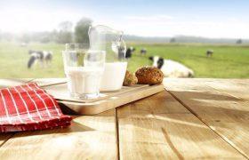 Manfaat Susu Bear Brand untuk Perokok yang Meminumnya Setiap Hari